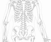 Zoom sur l'ostéopathie
